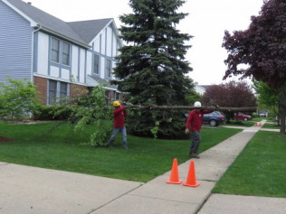 tree removal, lincolnshire il