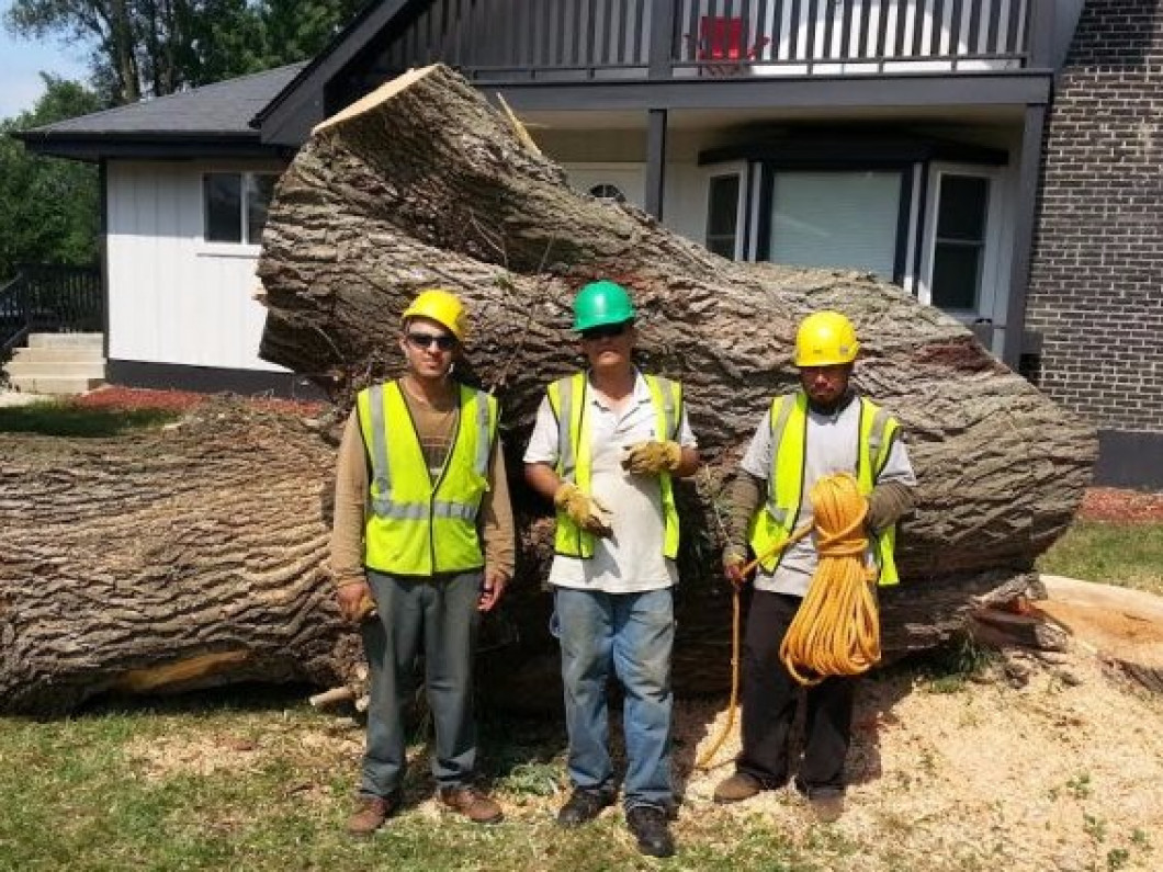 Tree Removal - Safe and Efficient